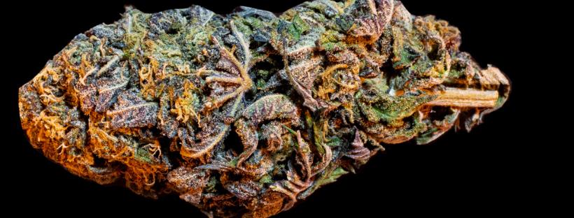 What Is A Marijuana Strai