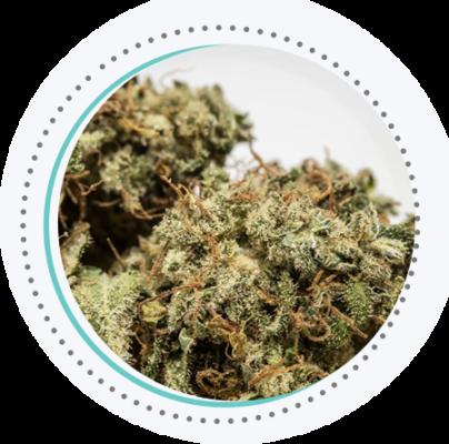 cannabis sativa weed bud close up