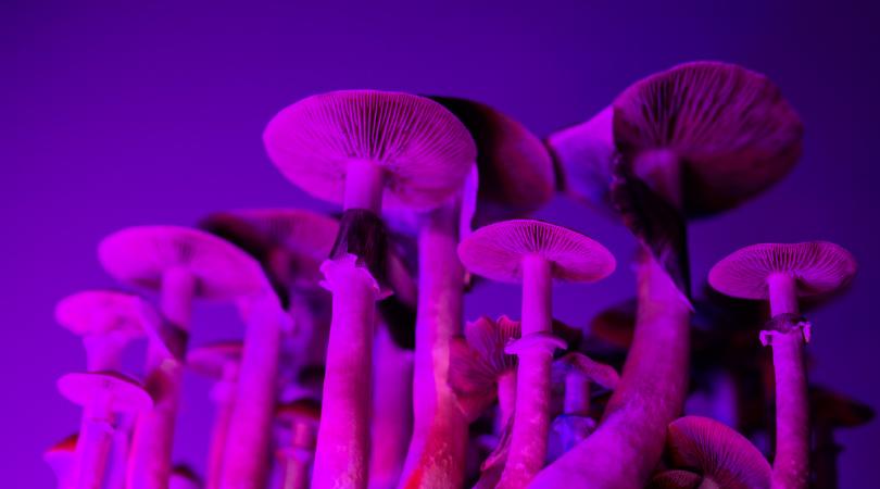 Magic Mushrooms Microdosing Guide