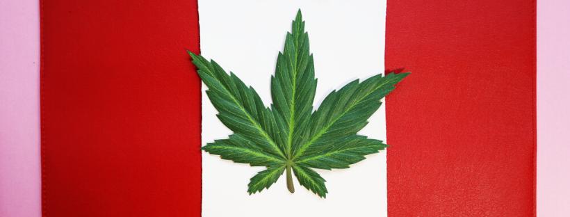 Canada Marijuana Pricing Guide